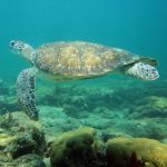 sea turtle florida