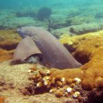 nurse shark florida